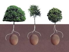 Forget Coffins: These Burial Pods Will Let You Turn Into A Tree When You Die