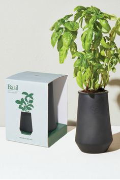"""Give the gift of green—a must-have for aspiring gardeners, tea lovers, jet-setters, DIY families, city dwellers, and more. Designed to be reused. Just add water! This self-watering grow kit features a terracotta-colored glass planter outfitted with a passive hydroponic system known as """"wicking,"""" which brings water and nutrients up to the plant's roots. Includes a stainless steel net pot, wick, non-GMO seeds, soilless growing medium, plant food, and instructions for success. Includes Organic… Glass Planter, Planter Pots, Grow Kit, Hydroponics System, Organic Seeds, Growing Herbs, Grow Lights, Garden Seeds, Recycled Glass"""