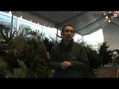 Politique - Quel sapin de Noël choisir ? - http://pouvoirpolitique.com/quel-sapin-de-noel-choisir/