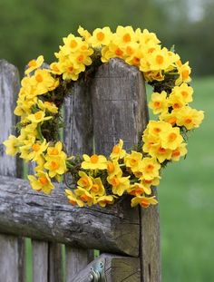 Yellow Spring Wreath - My site Spring Colors, Spring Flowers, Daffodils, Tulips, Yellow Springs, Spring Sign, Summer Wreath, Mellow Yellow, Belle Photo