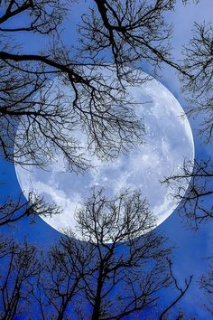 Beautiful Moon ✿