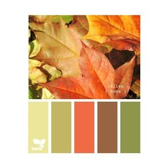 Color Combos ❤ liked on Polyvore featuring backgrounds, colors, colours, design seeds and pictures