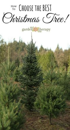Choosing the best christmas tree for your home is a cinch with this detailed guide