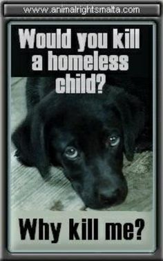 Please Help Us Today By Putting Bans On All Kill Shelters Everywhere In The World Today.