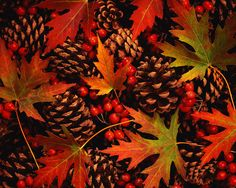 Fake red berries & fall leaves would look great in a hurricane container with natural pine cones!