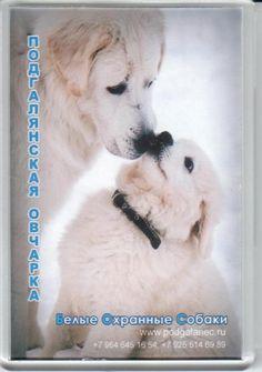 Магнит. 50 рублей Dogs, Shop, Animals, Animais, Animales, Animaux, Pet Dogs, Doggies, Animal