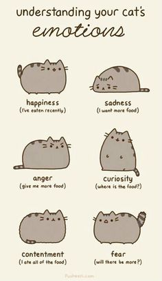 understanding your cat's emotions. =^.^=