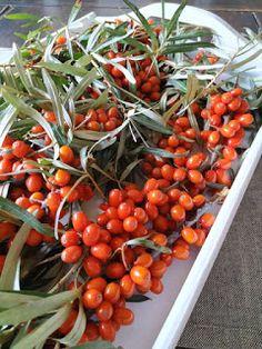 PASTU domov: Zpracování rakytníku Vegetables, Cooking, Health, Garden, Milan, Places, Alcohol, Kitchen, Garten