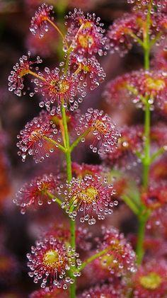 Morning dew on garden flowers