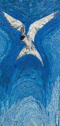 Arctic Tern | Kimmy McHarrie