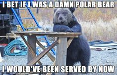 Funny pictures about Grizzly Bears Have It Rough. Oh, and cool pics about Grizzly Bears Have It Rough. Also, Grizzly Bears Have It Rough photos. Funny Animal Pictures, Funny Photos, Funny Animals, Cute Animals, Crazy Pictures, Meme Pictures, Animal Captions, Animal Memes, Funny Bears