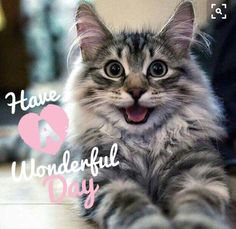 Something to brighten up the day. Have a wonderful day!