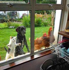 Afinal quando é o nosso almoço!