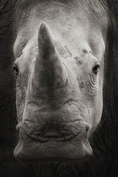 White Rhino, Mario Moreno