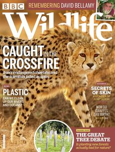 Buy Digital and Print Copies of BBC Wildlife Magazine - May Available on Desktop PC or Mac and iOS or Android mobile devices. Animal Magazines, Award Winning Photography, Latest Discoveries, Cheetahs, Closer To Nature, Stunning Photography, Science News, Article Writing, Environmental Issues