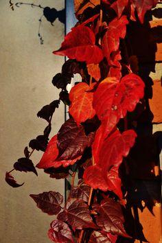 alejandra Koch las últimas hojas