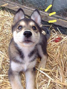 The Best of Tumblr, artsybud:   lil' pups lookin' up