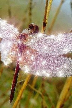 sparkling dragonfly --This dragonfly is so gorgious! I do not know how it got it's wings! Beautiful Bugs, Beautiful Butterflies, Amazing Nature, Beautiful Creatures, Animals Beautiful, Dragonfly Art, Dragonfly Photos, Fotografia Macro, Fear Of Flying