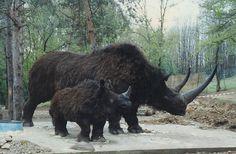 woolly rhinoceros - Google Search