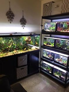 Tropical Fish Aquarium, Aquarium Fish Tank, Planted Aquarium, Tropical Fish Tanks, Aquarium Stand, Home Aquarium, Aquarium Design, Fish Tank Themes, Fish Tank Stand