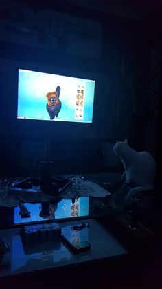 My cat watching sims 4 on confused.