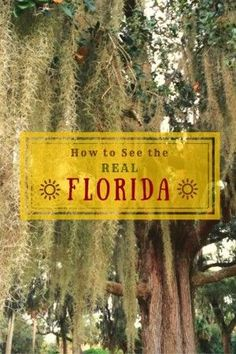 Backroad Planet | How to See the Real Florida: 11 Essential Web Sites | http://backroadplanet.com