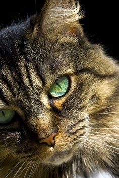 Help Your Cat Adapt to a New Home...Good, short piece if you are moving or have a new kitty.EM