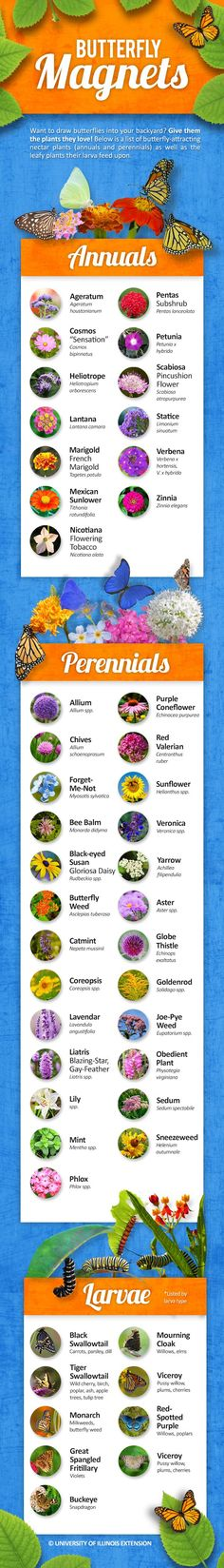 butterfly garden UPDATED Infographic: Want more butterflies in your yard Plant the nectar plants they love! Heres a great list of butterfly-attracting annual and perennial plants including those needed for butterfly larvae. Outdoor Plants, Garden Plants, Outdoor Gardens, Shade Garden, Butterfly Plants, Butterflies, Butterfly Feeder, Diy Butterfly, Butterfly Bush