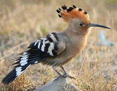 طيور جميلة من حول العالم