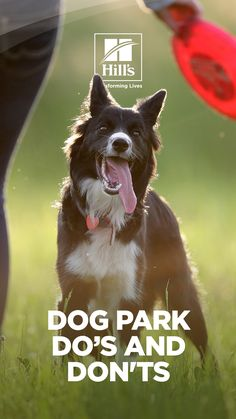 Dog park trips offer dog parents and their pets a great opportunity to bond, socialize, and run off some pent-up energy, but with all that fun comes responsibility. Dog park rules and regulations are there to ensure the safety and fun of all its visitors. No matter what type of dog park you go to, knowing and following its rules will help keep you and your dog safe. Huge Dogs, I Love Dogs, Funny Animal Memes, Cute Funny Animals, Loki, American Alsatian, Female Dog In Heat, Loyal Dogs, Pet News
