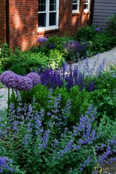 A romantic cottage look: fragrant catmint (Nepeta sp), perennial sage (Salvia sp. - A romantic cottage look: fragrant catmint (Nepeta sp), perennial sage (Salvia sp). and lilac allium - Purple Plants, Salvia, Landscape Design, Cottage Garden Design, Cottage Garden, Romantic Cottage, Urban Garden, Purple Garden, Backyard