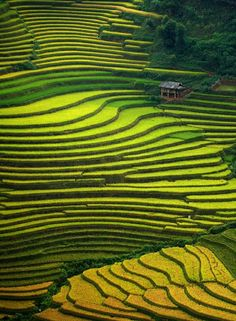 Terraced rice fields, Mu Cang Chai, Vietnam