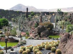 Jardín de Cactus de Lanzarote en las Islas Canarías, ¡impresionante! Lanzarote Costa Teguise, Spanish Islands, Spanish Garden, Cactus Flower, Cactus Plants, Cacti, Garden Pictures, Canary Islands, Spain Travel