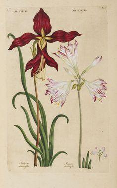botanical illustration | Graphic Design Theory