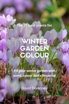 The best plants for winter garden colour - David Domoney - - Light up your garden with flowers in winter! TV Gardener and Designer David Domoney chooses the best plants and flowers for winter garden colour. Winter Plants, Winter Flowers, Winter Colors, Garden Care, Garden Beds, Garden Plants, Flowers Garden, Indoor Garden, Outdoor Gardens