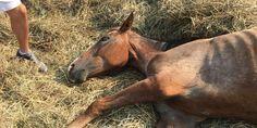 petition: Investigate The Death Of Horse On Barnes Road, Millington, MI