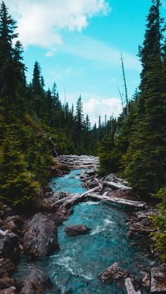 The latest iPhone11, iPhone11 Pro, iPhone 11 Pro Max mobile phone HD wallpapers free download, river, stream, stones, spruce, forest - Free Wallpaper   Download Free Wallpapers