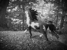 Lakota is another majestic and beautiful mustang stallion. He is named for the brave Indian tribes out west. He is one of the greats