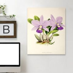 "East Urban Home 'Fitch Orchid Cattleya Walkeriana' Print Size: 25"" H x 19"" W x 1.5"" D, Format: Black Framed"