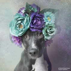 "French Photographer Stands Up For Animal Rights Through ""Pit Bull Flower Power"" Project  Sophie Gamand is a French photographer and animal rights advocate based in New York city. Since 2010, her award-winning work has focused on bringing humans and dogs closer together in peaceful coexistence by portraying the animals through innocent imagery.  Her latest project titled ""Pit Bull Flower Power"" is an initiative for an animal adoption project helping change people's perception of pit bulls"