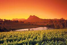 Paarl Wine Estates