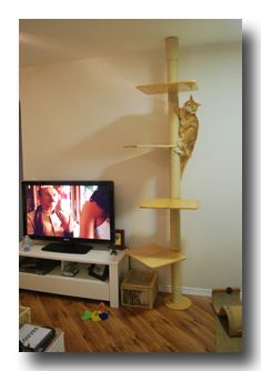 Diy Floor To Ceiling Cat Scratch Pole Cathouse Design