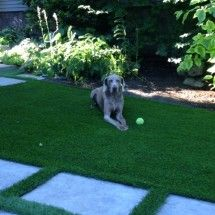 Owner's dog says thank you Pet Grass, Landscape, Dog, Pets, Animals, Diy Dog, Scenery, Animales, Animaux