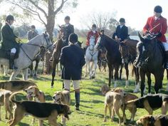 The Ghoulburn Valley Hunt Club, Virginia and their heritage Black & Tan Foxhounds. Hunt Club, Fox Hunting, The Fox And The Hound, Virginia, Parents, Horses, Dogs, Animals, Black