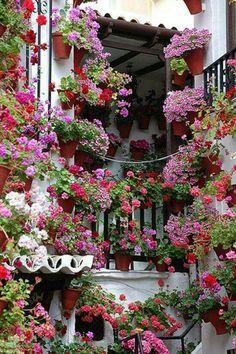 Flower Covered Windows