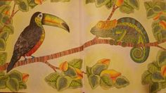 Toucan And Chameleon 2 Pg Spread