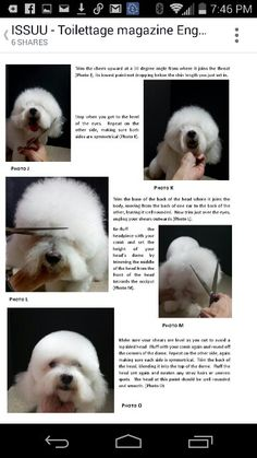 28 best french poodle hair cuts images on pinterest pets poodles bichon groom dog grooming solutioingenieria Image collections