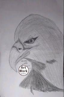 رسومات فنية سهلة للاطفال رسم صقر Drawings Art Male Sketch