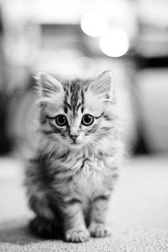 Kitten by Akimasa Harada on 500px