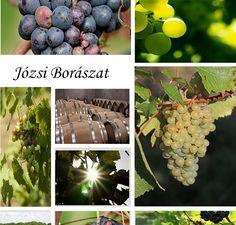 PS-ben készített hangulati képek bio borászat. Ps, Fruit